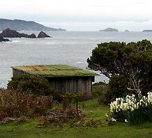 Bruny Island by Kristi Robertson