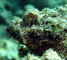Bearded scorpionfish by cooperscuba