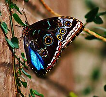 Colorful Butterfly by Linda Yates