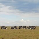Under Serengeti Skies, Tanzania, Africa by Adrian Paul