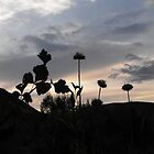 Silhouettes by Evening Light by Jan  Tribe