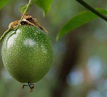 Passionfruit by voir