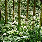 Wild Garlic ~ Lyme Regis by Susie Peek