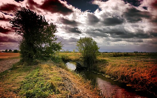 Dark Side of Wade Marsh by Geoff Carpenter