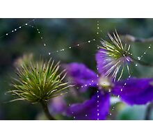 Strange web (from my summer house) Photographic Print