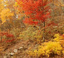 Colors Of Autumn, Shenandoah by Stephen Vecchiotti