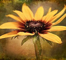 You are my sunshine... by Kelly Cavanaugh