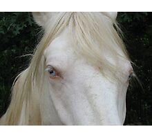 Pretty Blue Eyes Photographic Print
