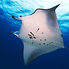 Manta Flyover - Cocos (Keeling) Islands by Karen Willshaw
