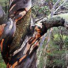 The tree by iandsmith