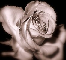 Rosebud Victoriana by naturelover