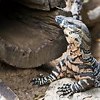 Lace Monitor by WantedImages