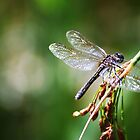 Dragonfly by dannytheniceguy