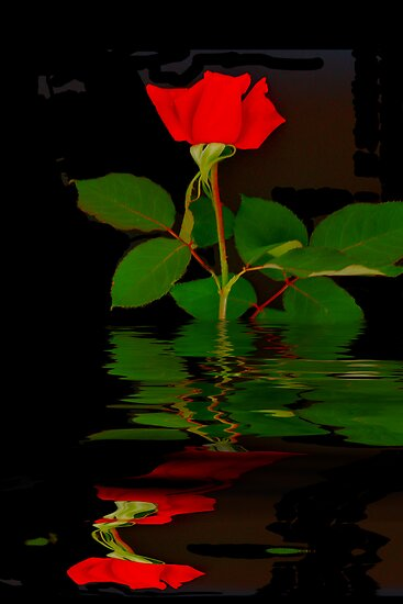 Rose Bud Reflection by Elaine Teague