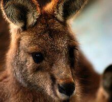 Kangaroo :) by eisblume