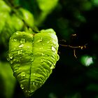 Green heart by LeonaParadoxa