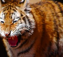 Hissing by laureenr