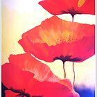 Poppies by Angela Palibrk
