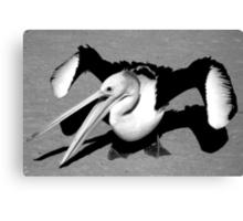 """Rogue Pelican"" Monkey Mia, Western Australia Canvas Print"