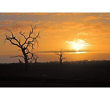 Farm Trees At Sunset  Photographic Print