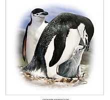 CHINSTRAP PENGUIN 3 by owen bell