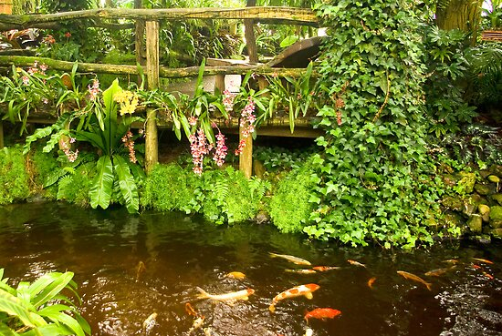 Tropical Island pond  by steppeland
