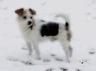 ~My Snow Covered Coat~ by NatureGreeting Cards ©ccwri