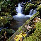 Allan Erickson's Oregon  by Allan  Erickson