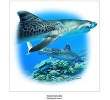 TIGER SHARK 4 by DilettantO