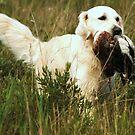 duck for dinner.... by Alan Mattison