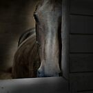THE HORSE REFUGE  by scarletjames