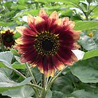 Red Sunflower by jackie martino