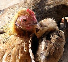 Annie and Her Chick by angelandspot