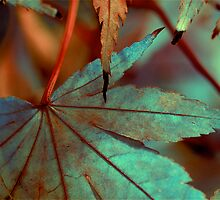 Colors of color by Tenee Attoh