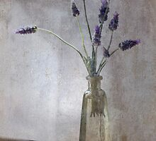 Lavender Again by picketty
