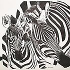 Zebra bonding by Jodi Cox