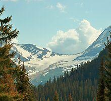 Mountain Pines by Diane Trummer Sullivan