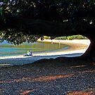 Beach Tree by ShotsOfLove