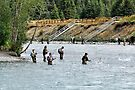 Salmon Fishing Alaskan Style by Barbara Burkhardt