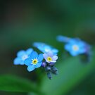 Macro Magic by Clare Colins