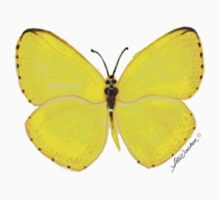 Yellow Butterfly Kids Clothes