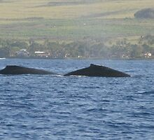 Humpback Whales by sandra greenberg