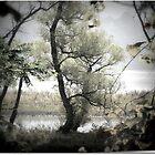 quiet trees by Lynn McCann