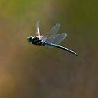 Dragonfly Heaven by David Friederich