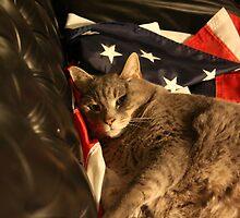 Carlos, American Feline by eelsblueEllen