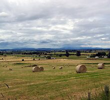 Hay Bales by Tasphoto