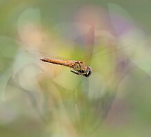 Flight of the Golden Dragonfly by Bonnie T.  Barry