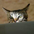 Kali peeking by Rhonda R Clements