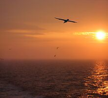 Sunrise on the North Sea by neilk