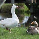 Mother Goose by KeepsakesPhotography Michael Rowley